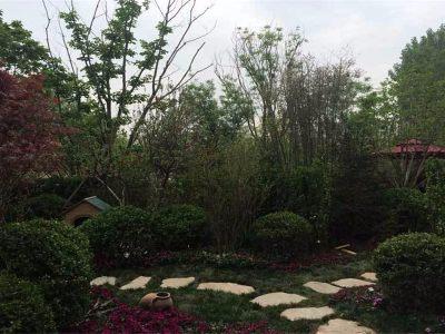 别墅园林实景